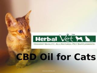 CBD Oil for Cats.pptx